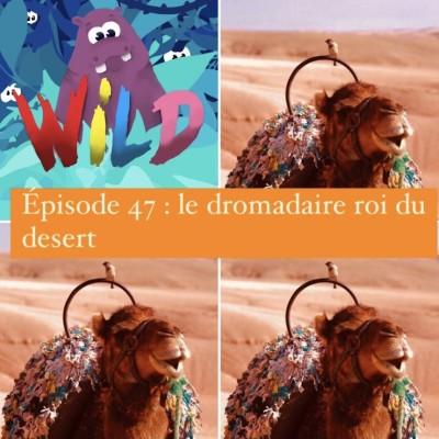 WILD#47 : le Dromadaire roi du désert cover