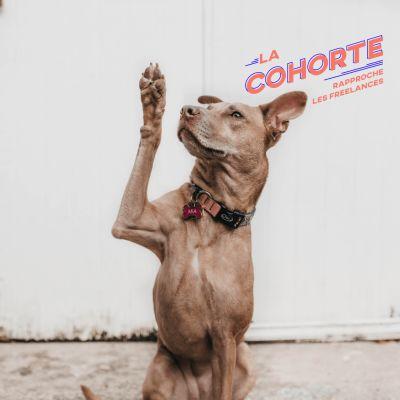 La Cohorte/ Bonus/ Par quel épisode commencer pour découvrir le podcast cover