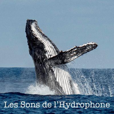 Les Sons de l'Hydrophone cover