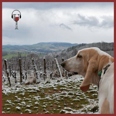 Hors-Route des vins : Le vignoble de l'Auxerrois cover