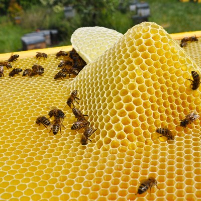 Ce monde qui nous inspire #3 Les abeilles cover