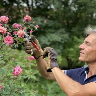 Le savoir-faire du rosiériste au Jardin de Roquelin cover