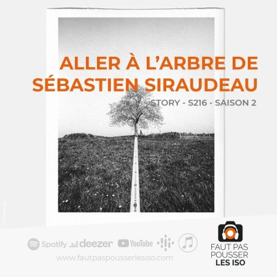 STORY - S216 - Aller à l'arbre de Sébastien Siraudeau cover