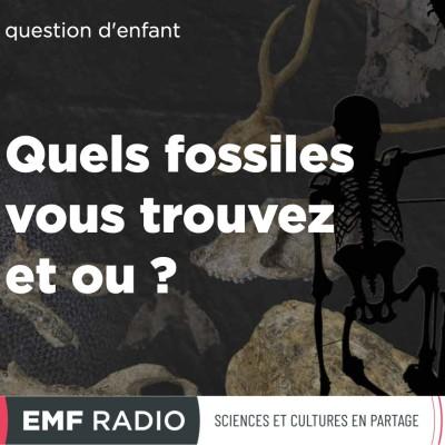 Question d'enfant : quels fossiles vous trouvez et ou ? cover