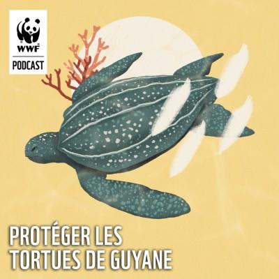 Protéger les tortues de Guyane cover