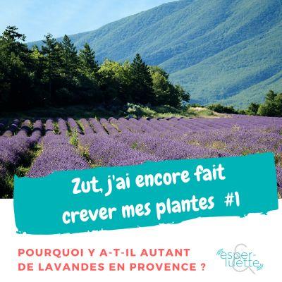 image La Lavande - Chronique 'Zut j'ai encore fait crever mes plantes'