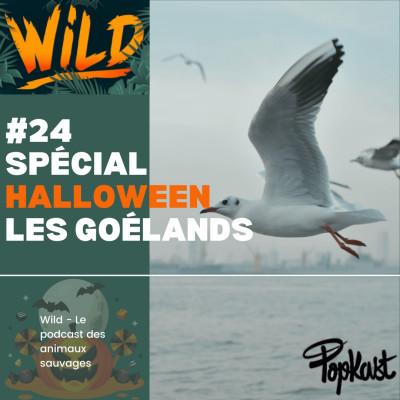Wild #24 - Série Halloween - Les goélands cover
