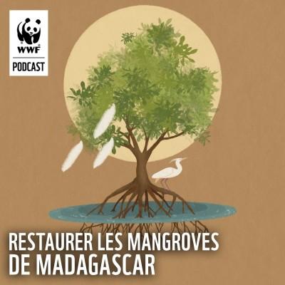 Préserver les mangroves de Madagascar cover