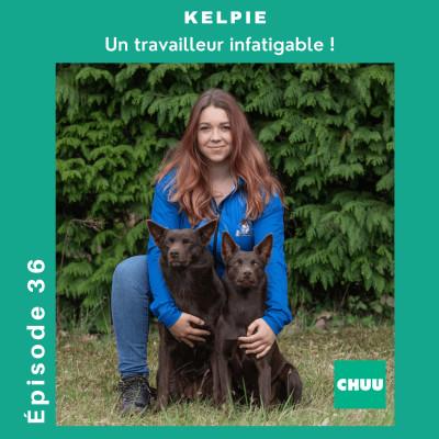# 36 - KELPIE - Un travailleur infatigable ! cover