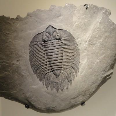 S03E17 Grandes extinctions de masse 4/6: Quand la Terre fait table rase de son passé (Sylvie Crasquin, paléontologue) cover