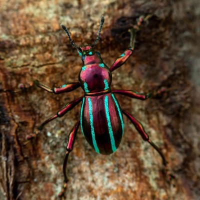Best of d'été 23: S02E77 Insectes 2/8: Les principales familles, Ennaloel Mateo-Espada (écologue) cover