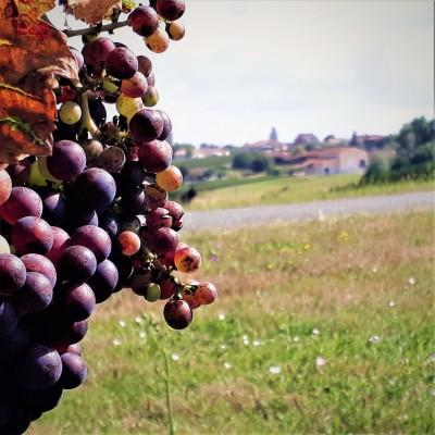Les citoyens de la vigne 2 - Didier cover