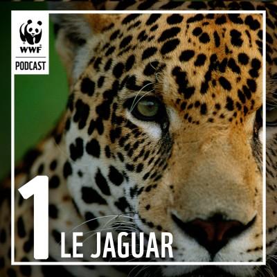 Épisode 1 : À la rencontre du jaguar en Guyane cover