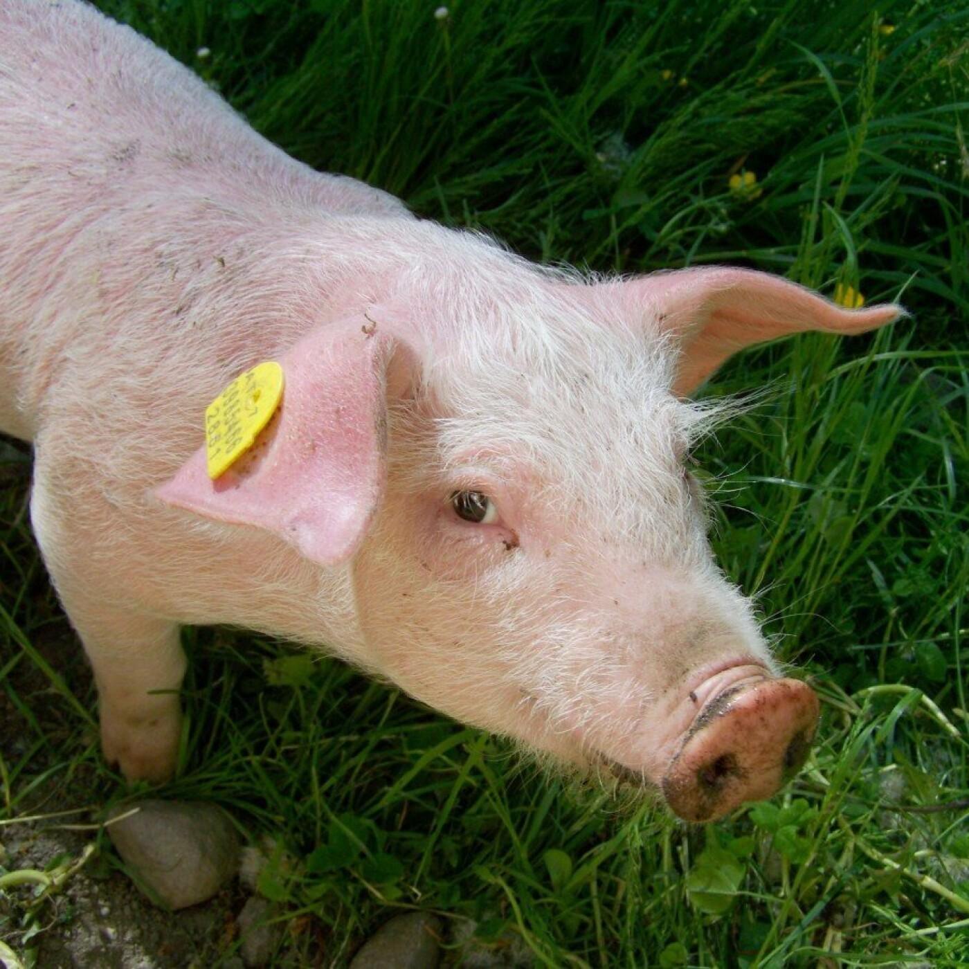 PETA tweete contre les violences animales