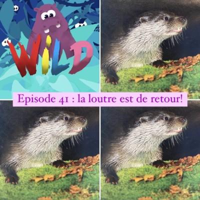 WILD#41-La loutre est de retour ! cover