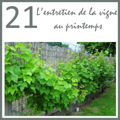 21 - L'entretien de la vigne au printemps cover