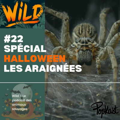 Wild #22 - Série Halloween - Les araignées cover