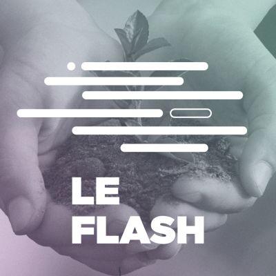 image Flash #18 - Pourquoi l'IA n'est pas (encore) écolo ?