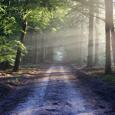 Se promener en forêt fait du bien ! cover