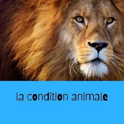 la condition animale cover