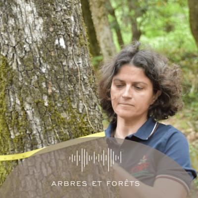 Épisode 5 - Arbres et forêts cover