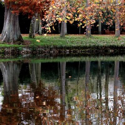 Découvrez la forêt de Rambouillet cover