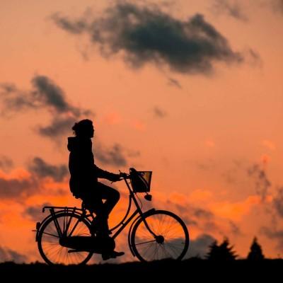 Chien perdu : des recherches à vélo sur autoroute !