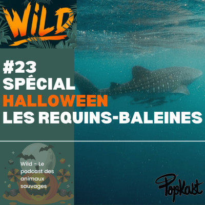 Wild #23 - Série Halloween - Les requins-baleines cover