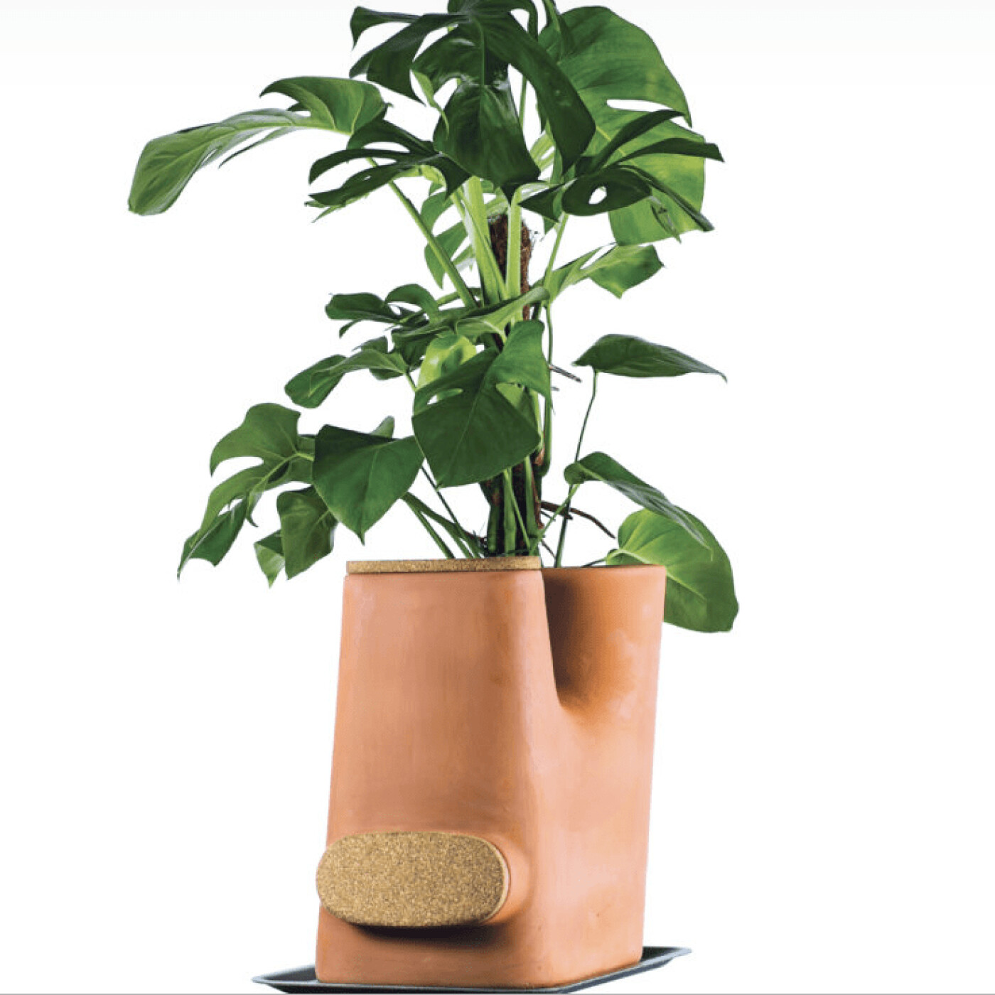 Henri Thomas - TRANSFARMERS Pot de fleurs composteur - Business Club S2021 E66