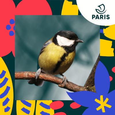 Les mésanges parisiennes cover