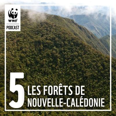 Épisode 5 : Protéger les forêts emblématiques de Nouvelle-Calédonie cover