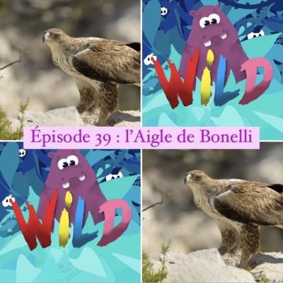 WILD#39-série spéciale UICN-Majestueux et un peu paresseux : l'aigle de Bonelli cover