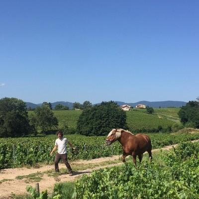 Episode 2 Le cheval au travail cover