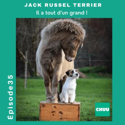 """# 35 - JACK RUSSEL TERRIER - """"Il a tout d'un grand !"""" cover"""