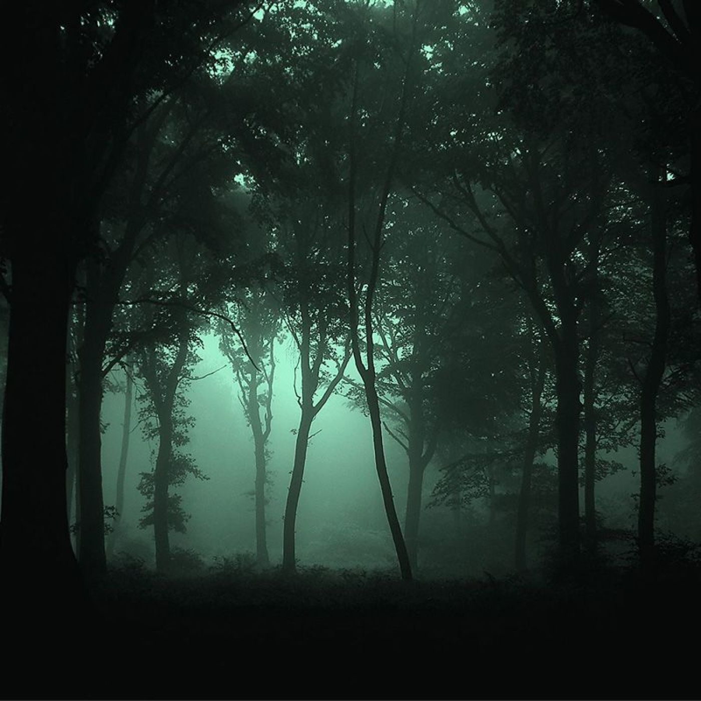 Forest by Night Wind / Crickets / Owls / Rain Sounds