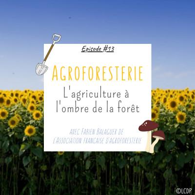 #13 Agroforesterie : l'agriculture à l'ombre de la forêt - Association française d'agroforesterie cover