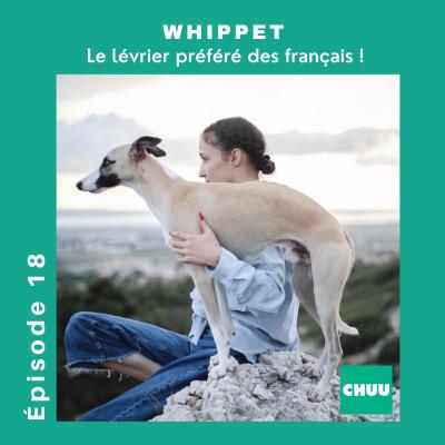 # 18 - WHIPPET - Le lévrier préféré des français ! cover