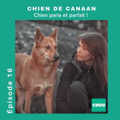 #16 - LE CHIEN DE CANAAN , chien paria et parfait ! cover