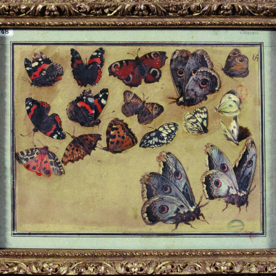 Rencontres sauvages avec Anne Simon cover