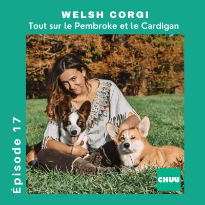 # 17 -WELSH CORGI - Tout sur le pembroke et le cardigan ! cover