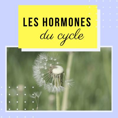 Thumbnail Image Les Hormones principales de notre cycle menstruel