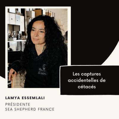 Les captures accidentelles de cétacés - Lamya Essemlali cover