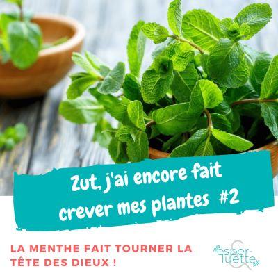 image La Menthe - Chronique 'Zut j'ai encore fait crever mes plantes'
