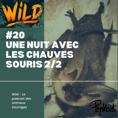 Wild #20 - Une nuit avec les chauves-souris (2/2) cover