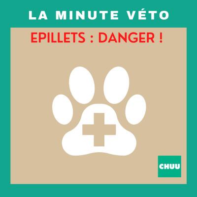 La minute véto : Les épillets : quels dangers pour votre chien ? | #Santé5 cover
