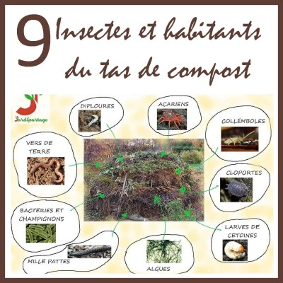 Insectes et habitants du compost cover