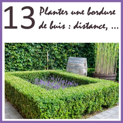 Planter une bordure de buis cover