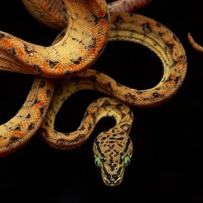 S02E53 Les serpents les plus incroyables 4/4, Rémy Falchi cover