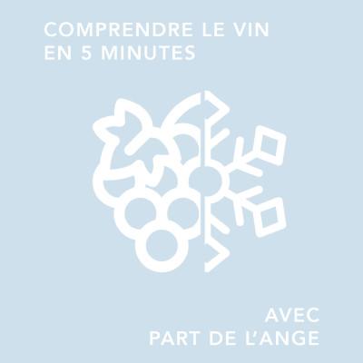 La vigne en hiver : mais que fait le vigneron/ comprendre le vin en 5 minutes cover