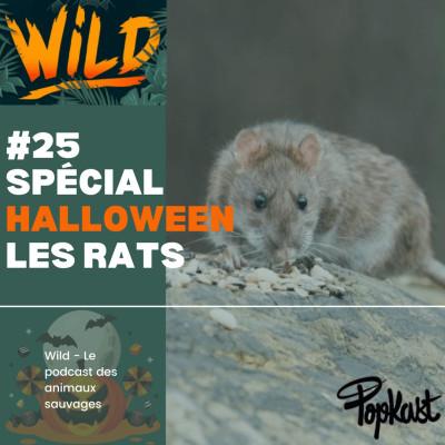 Wild #25 - Série Halloween - Les rats cover